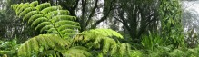 cropped-hawaii-rainforest-panorama-1_1200px.jpg