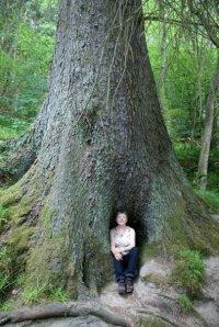 hildegard in forest